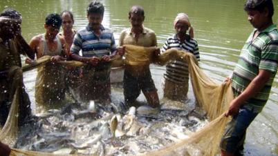 মাছ উৎপাদনে বাংলাদেশ বিশ্বে দ্বিতীয়