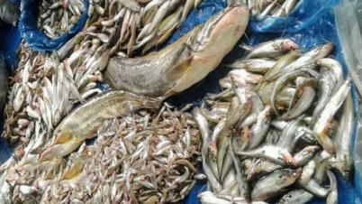 নাটোরে লক্ষ্যমাত্রার চেয়ে দ্বিগুণ মাছ উৎপাদন