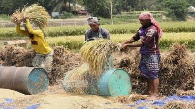 করোনাকালে সাফল্য: অর্থনীতিকে 'বাঁচিয়ে' রেখেছে কৃষি
