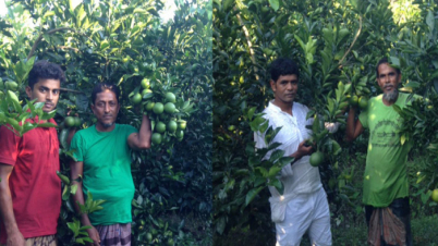 মাল্টায় স্বাবলম্বী পিরোজপুরের ৬শ' চাষি