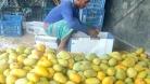 পাকা আমের সুবাসে মাতোয়ারা চাঁপাইনবাবগঞ্জ