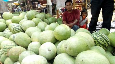 রাঙামাটিতে তরমুজের ফলন ভালো, খুশি কৃষক-ব্যবসায়ী