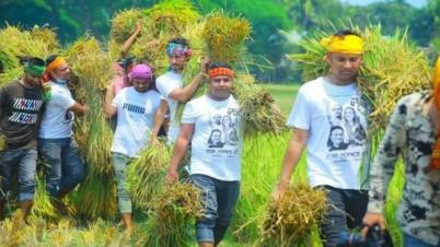 গফরগাঁওয়ে হতদরিদ্র কৃষকের ধান কেটে দিলো ছাত্রলীগ