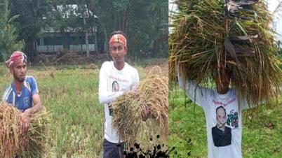 কৃষকের ধান কেঁটে মাড়াই করে দিল গোপালগঞ্জ ছাত্রলীগ
