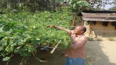করোনা সঙ্কটে আঙ্গিনায় সবজি চাষ: পারিবারিক কৃষিতে জোর
